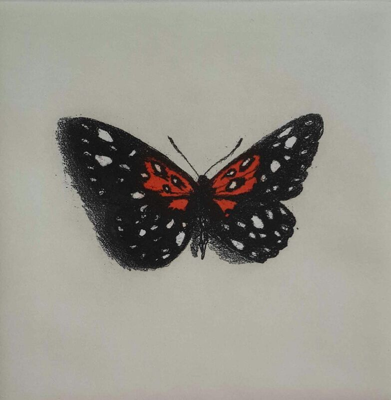 Lisa Milroy - Butterfly I -  Etching on paper - 30h x 30w cm