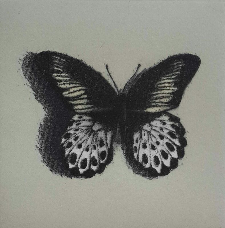 Lisa Milroy - Butterfly III -  Etching on paper - 30h x 30w cm